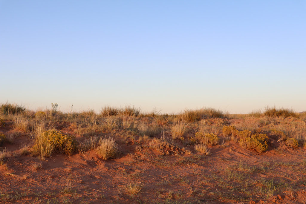 Evening view of orange red dirt and lit vegetation on the side of a rural road.